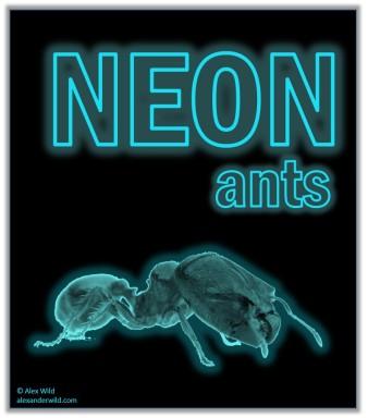 Neon Ants